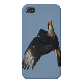 Crested Caracara iPhone 4 Case