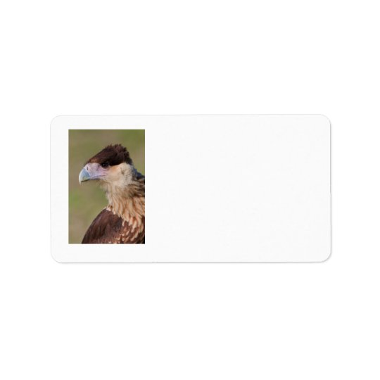 Crested Caracara Label