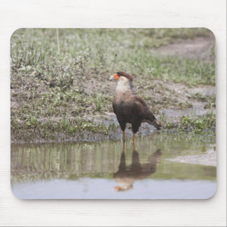 Crested Caracara Mouse Pad