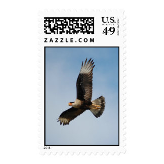 Crested Caracara Stamps