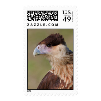 Crested Caracara Postage