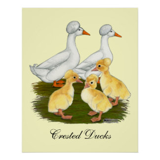 Crested Duck Family Poster