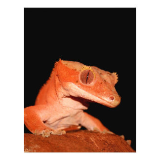 """crested gecko 8.5"""" x 11"""" flyer"""