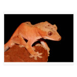 crested gecko post cards