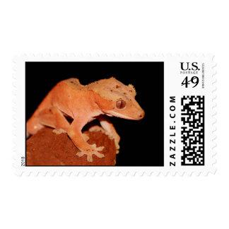 crested gecko postage stamp