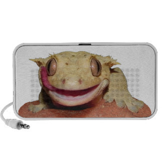 Crested Gecko smiling and licking iPhone Speaker