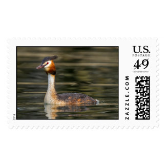 Crested grebe, podiceps cristatus, duck postage stamp