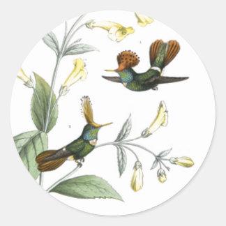 Crested Hummingbirds Classic Round Sticker