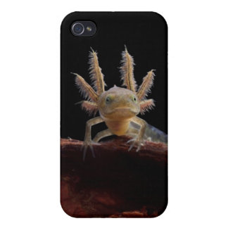 Crested newt larve iPhone 4/4S case