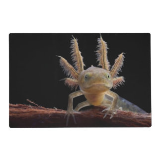 Crested newt larve placemat