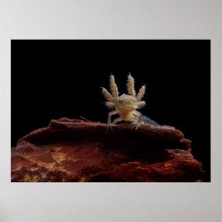 Crested newt larve poster