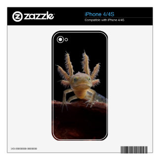 Crested newt larve skin for iPhone 4