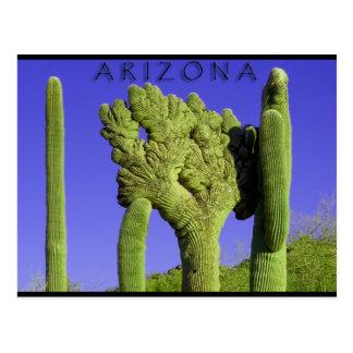 Crested Saguaro in Congress, Arizona Post Cards