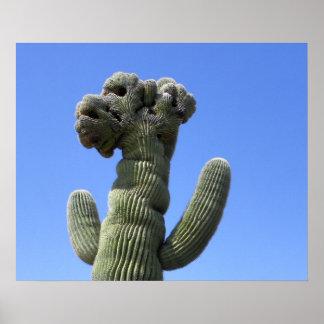 Crested Saguaro Poster