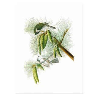 Crested Titmouse John James Audubon Birds America Postcard