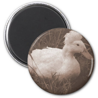 Crestie el pato con cresta imán redondo 5 cm