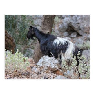 Cretan Wild Goat Postcard