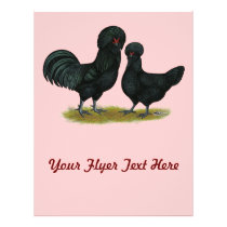 Crevecoeur Chickens Flyer