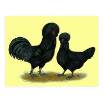 Crevecoeur Chickens Postcard