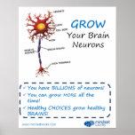 Crezca su poster de Brainology® de las neuronas de