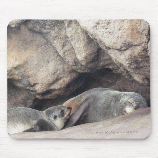 Cría 1 de la madre y de foca tapetes de raton