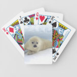 Cría de foca baraja cartas de poker