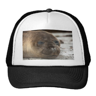 Cría de foca de elefante gorras de camionero