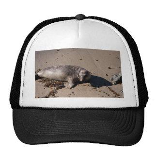 Cría de foca de elefante gorras