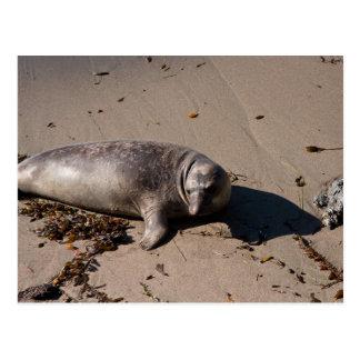 Cría de foca de elefante tarjeta postal