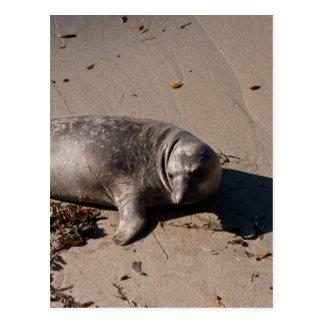 Cría de foca de elefante tarjetas postales
