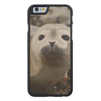 Cría de foca funda de iPhone 6 carved® de arce