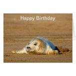Cría de foca gris linda - tarjeta de cumpleaños