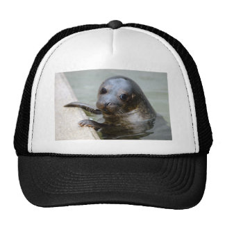 Cría de foca linda gorros bordados