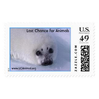 Cría de foca franqueo