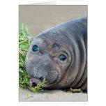 Cría de foca septentrional de elefante en Piedras Tarjeta De Felicitación