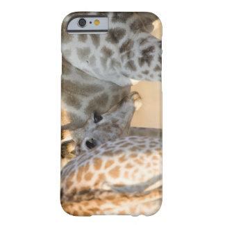 Cría del becerro de la jirafa (camelopardalis del funda barely there iPhone 6