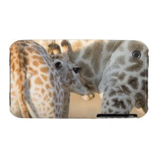 Cría del becerro de la jirafa (camelopardalis del funda para iPhone 3