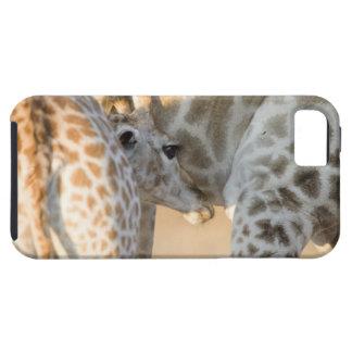 Cría del becerro de la jirafa (camelopardalis del funda para iPhone SE/5/5s