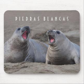 Crías de foca de elefante en Piedras Blancas Alfombrilla De Raton