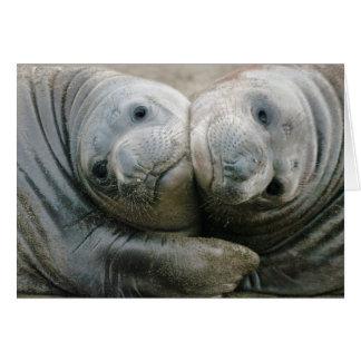 Crías de foca septentrionales de elefante tarjeta de felicitación
