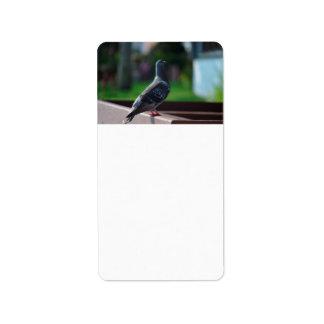 criatura del animal de la pluma de pájaro de la etiquetas de dirección