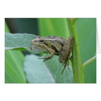 Cricket Frog Card