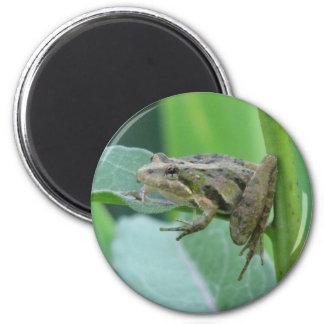 Cricket Frog Magnet