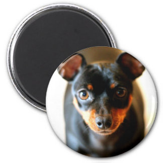 Cricket The Min Pin 2 Inch Round Magnet
