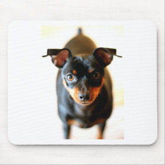 Cricket The Min Pin Mouse Pad
