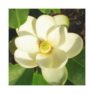 CricketDiane Southern Magnolia Wrapped Canvas Art