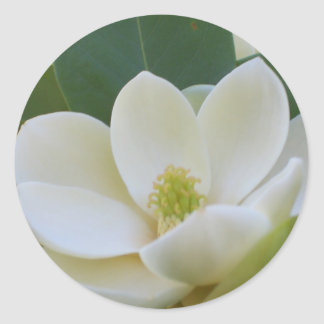 CricketDiane Southern Magnolias Round Stickers