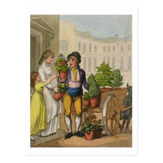 Cries of London: The Garden Pot Seller, 1799 (colo Postcard
