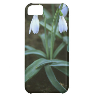 Crimean Snowdrop Closeup Case For iPhone 5C