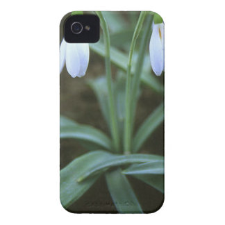 Crimean Snowdrop Closeup Case-Mate iPhone 4 Case